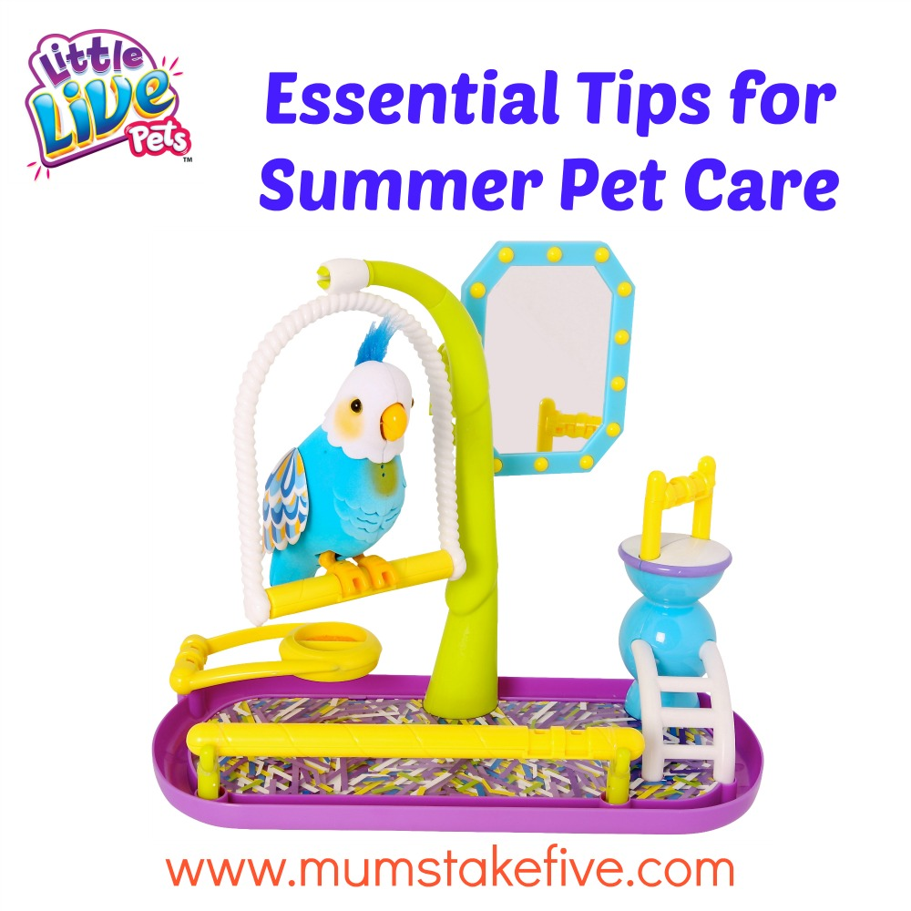 Caring for Pets During Summer