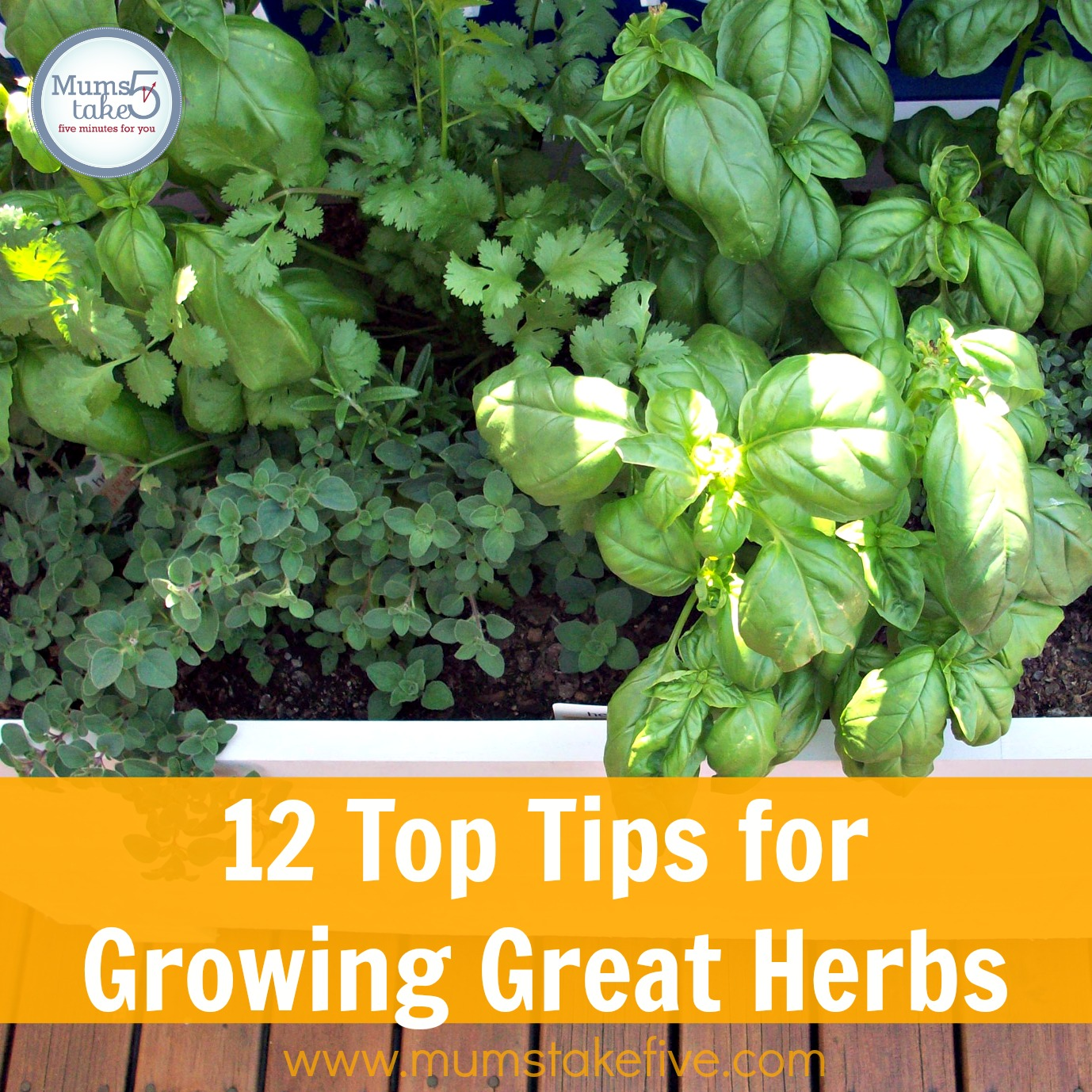 Top Tips for Growing your own herbs