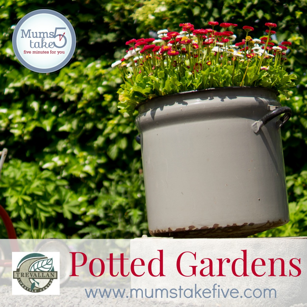 how to grow a potted garden