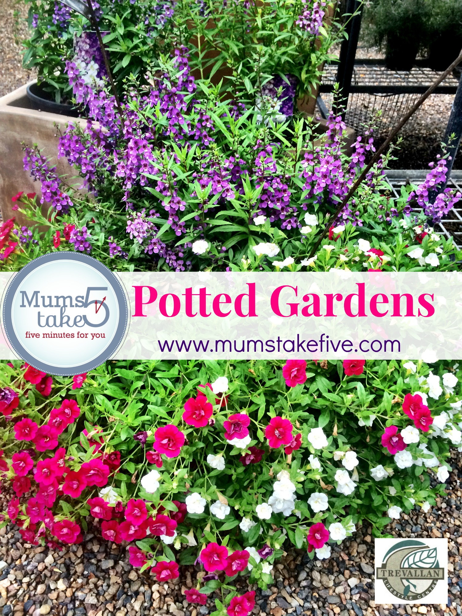potted gardens essential tips on how to keep potted plants
